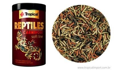 Reptiles Carnivore