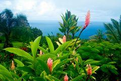 Flowering ginger plants.