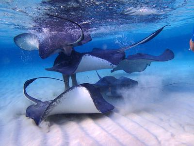 Snorkeling Stingray City And Cali Wreck On Grand Cayman