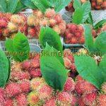 Satışını yaptığımız Tropikal meyveler ve bulunabilirlik zamanları