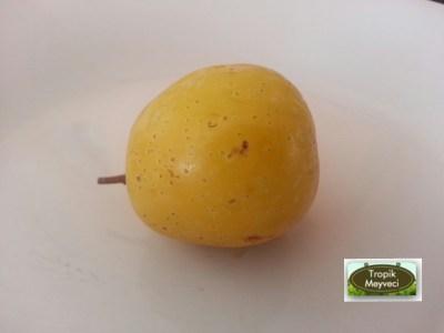 uvez-meyvesi-1
