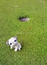 Disfrutando del mini-golf