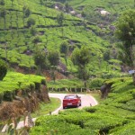 SUR DE INDIA: MUNNAR, PLANTACIONES DE TÉ, DÍA 9