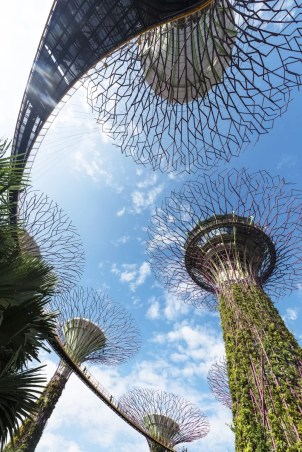 Wat te doen in Singapore: supertrees in Gardens by the bay