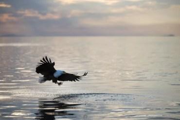 Wat te doen in Malawi: visarend op Lake Malawi