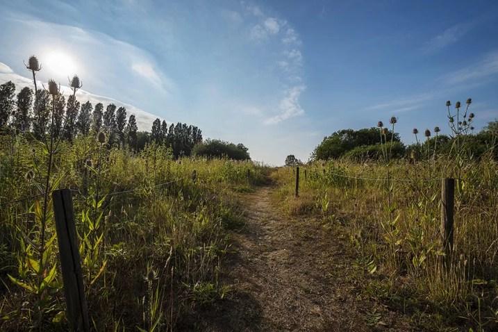 Wat te doen in Antwerpen: Natuurdomein Blokkersdijk
