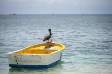 Pelikaan op boot in Aruba