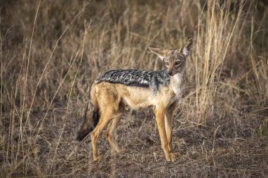 Nairobi National Park © Jonathan Ramael-13