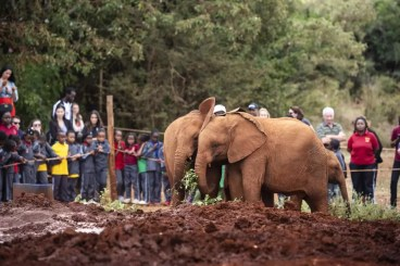 Jonge olifanten in Sheldrick Elephant Orphanage