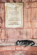Straathond slaapt tegen het Parlement in New Delhi