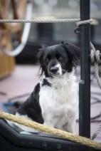 Waddeneilanden Iselmar Andere Hond