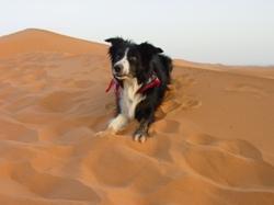 Aqui Marokko zand