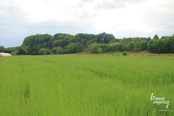 linen fields in Slovenia