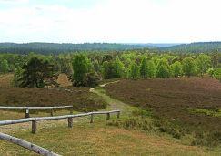 Brunsberg Heide und Wald