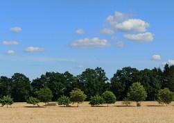 Sommer Felder und Wald