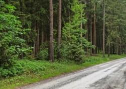 Wald und Berg