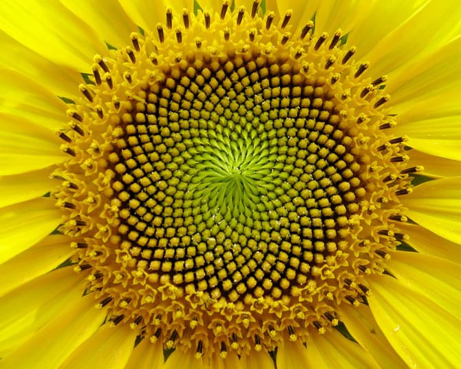 Image result for sacred geometry of nature