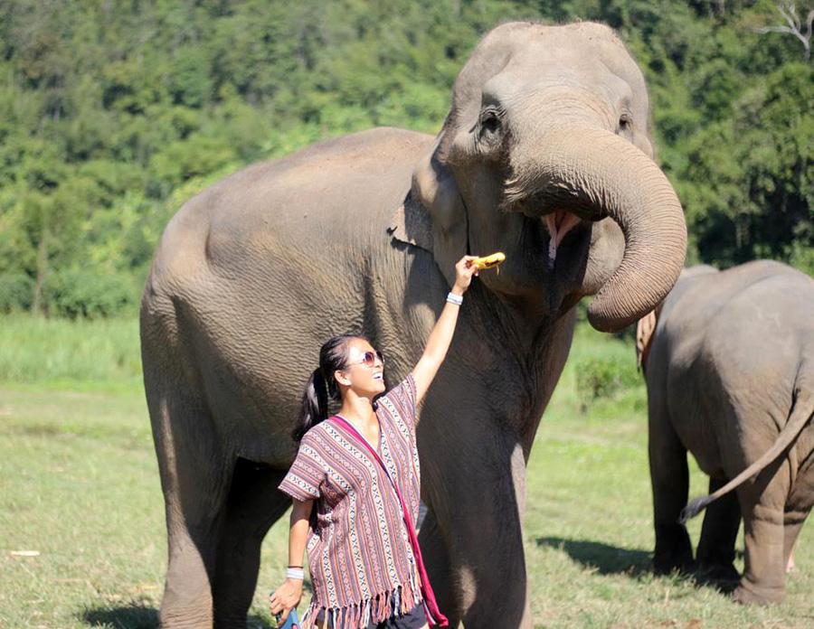 feed the elephants