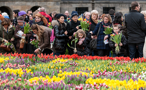 Image result for national tulip day