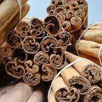 Cinnamomum zeylanicum syn. Cinnamomum verum