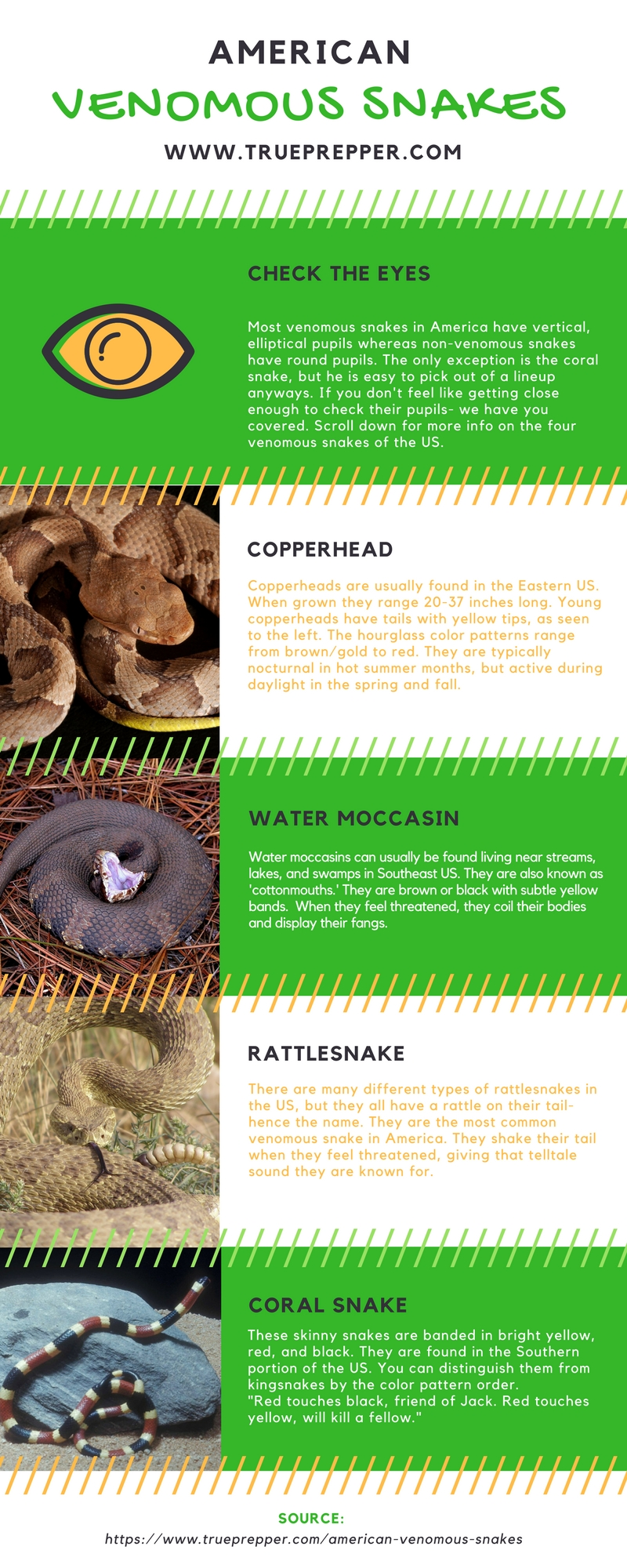 American Venomous Snakes Infographic