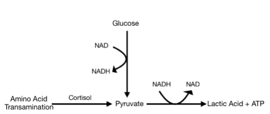 NAD Synthesis