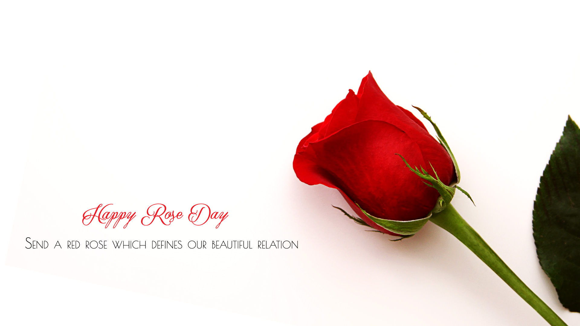 7th Feb Rose Day Wallpaper HD All Color Of Roses For