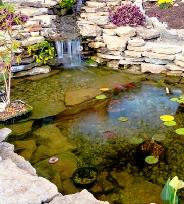 quels poissons pour un bassin de jardin