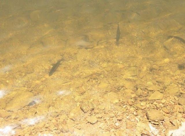 peces albufeira