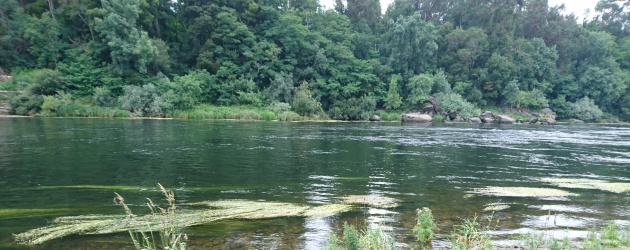 Edital de pesca no Rio Minho – 2020