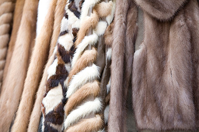 sustainable fashion means fur which is not bleached or dyed