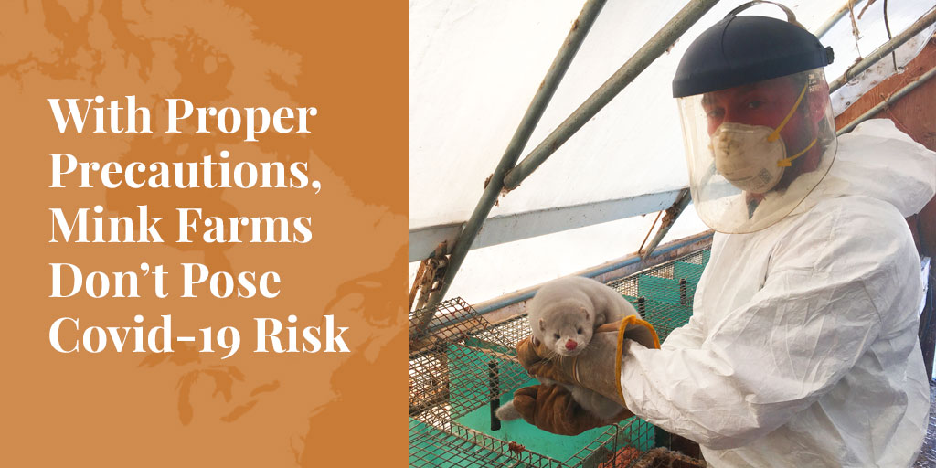 biosecurity on mink farms