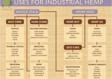 industrial hemp