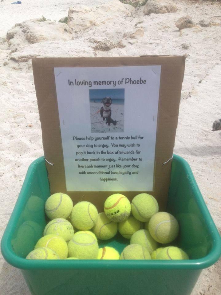 1. In Loving Memory Of Phoebe