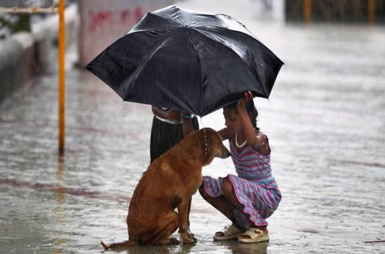stray dog Mumbai