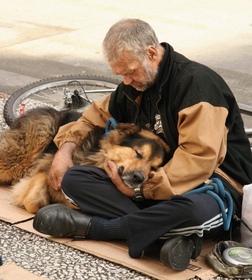homeless-dogs-kindness