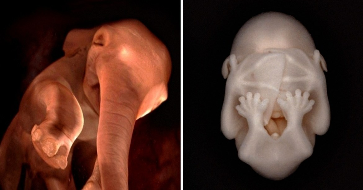 12 Incredible Pictures of Animal Embryos