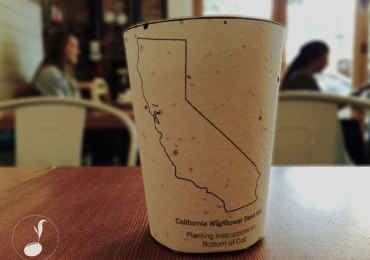biodegradable-plantable-coffee-cup-reduce-reuse-grow-5