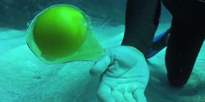 egg_underwater