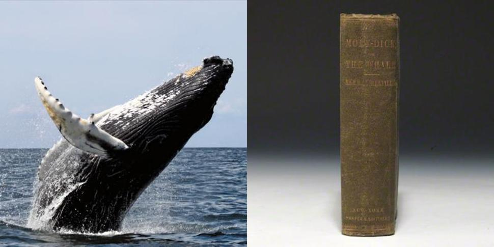 whales and moby dick