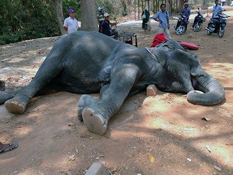 Sambo-The elephant (2)
