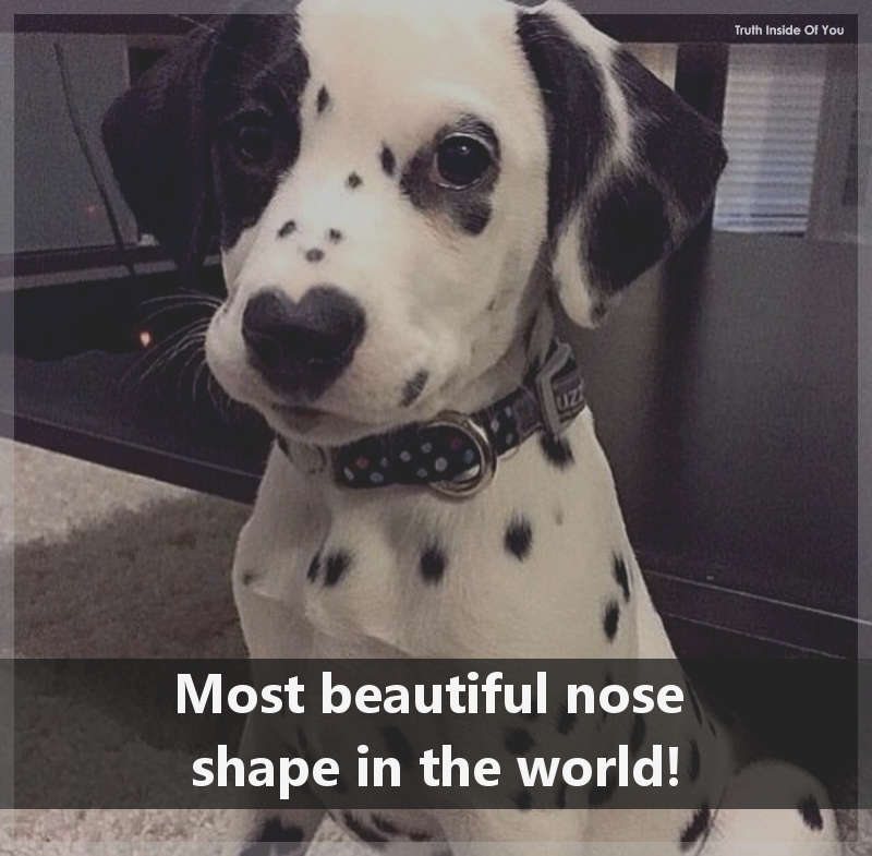 Most beautiful nose in the world!