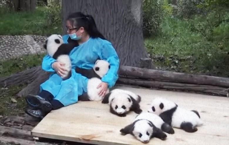 hugger-panda
