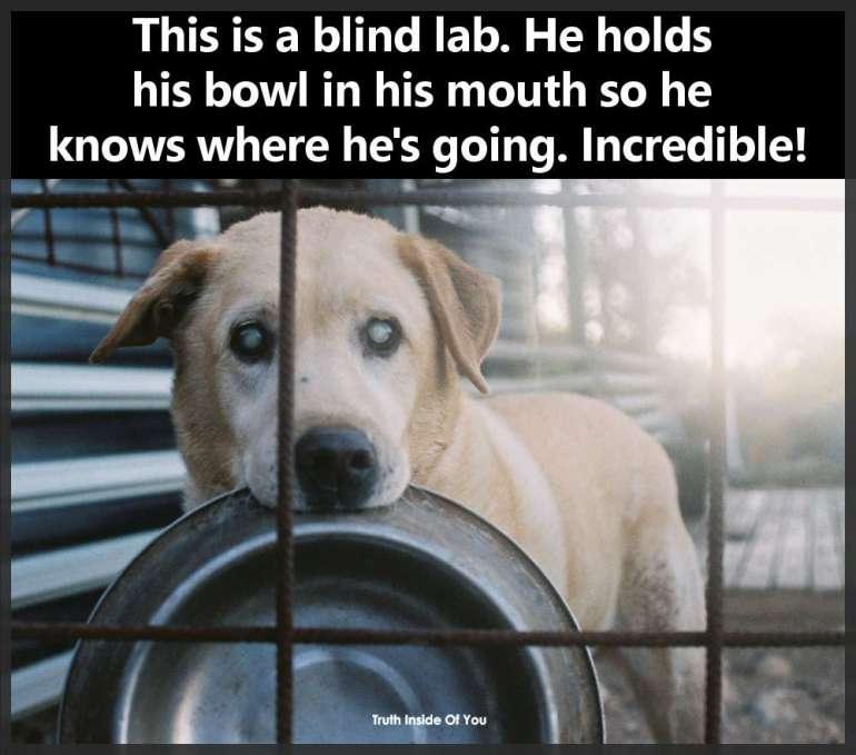 blind lab