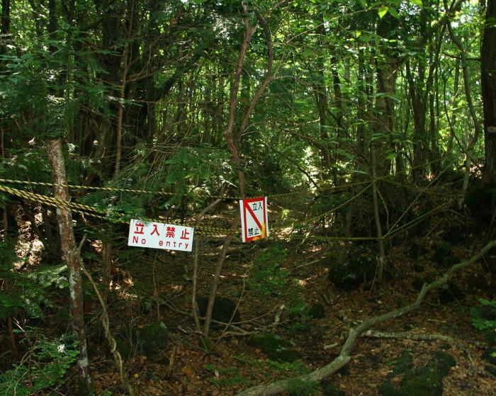 japan-s-infamous-suicide-forest-is