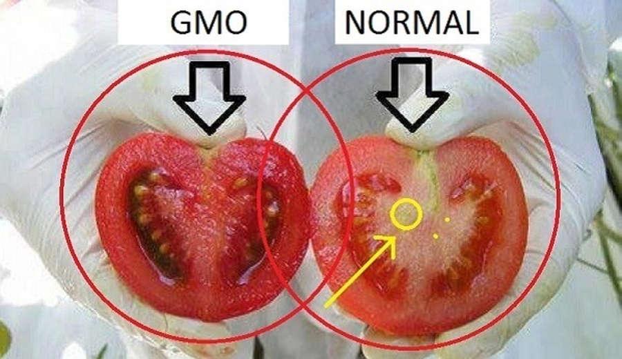 GMO Eating