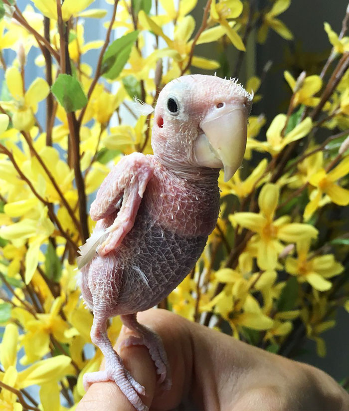 lovebird9