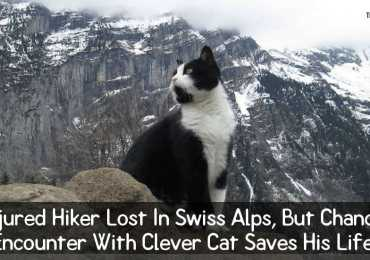 Injured Hiker Lost In Swiss Alps, But Chance Encounter With Clever Cat Saves His Life