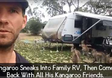 kangaroo-sneaks-into-family-rv-then-comes-back-with-all-his-kangaroo-friends