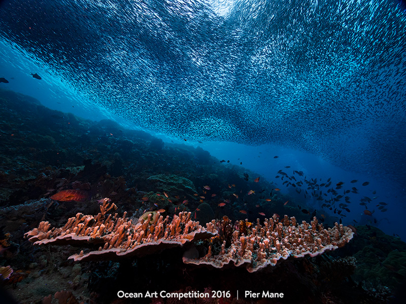 Τhese Beautiful Underwater Photographies Will Make You Want to Be a Diver.16
